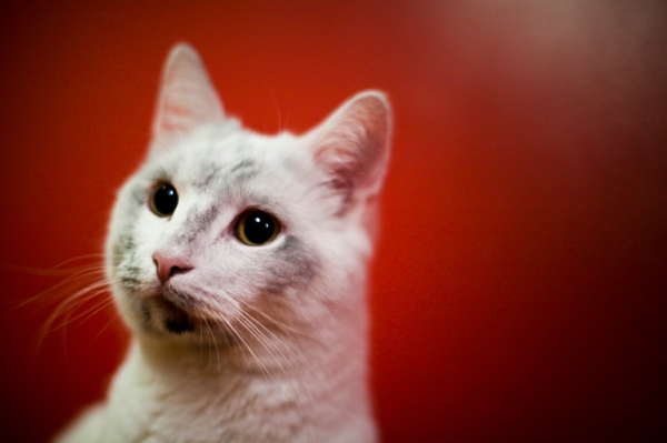 laban-sofia-lundberg-katt