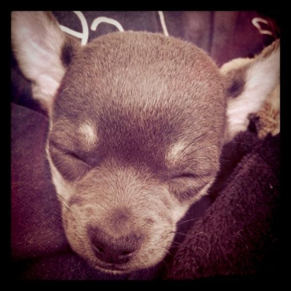 Min sover